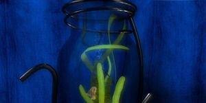 Dream Aquarium 3D Screensaver Ekran Görüntüsü