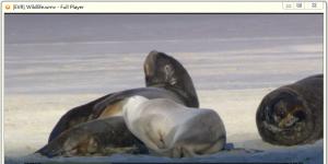 Full Player Ekran Görüntüsü
