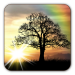 Sun Rise Free Live Wallpaper Android